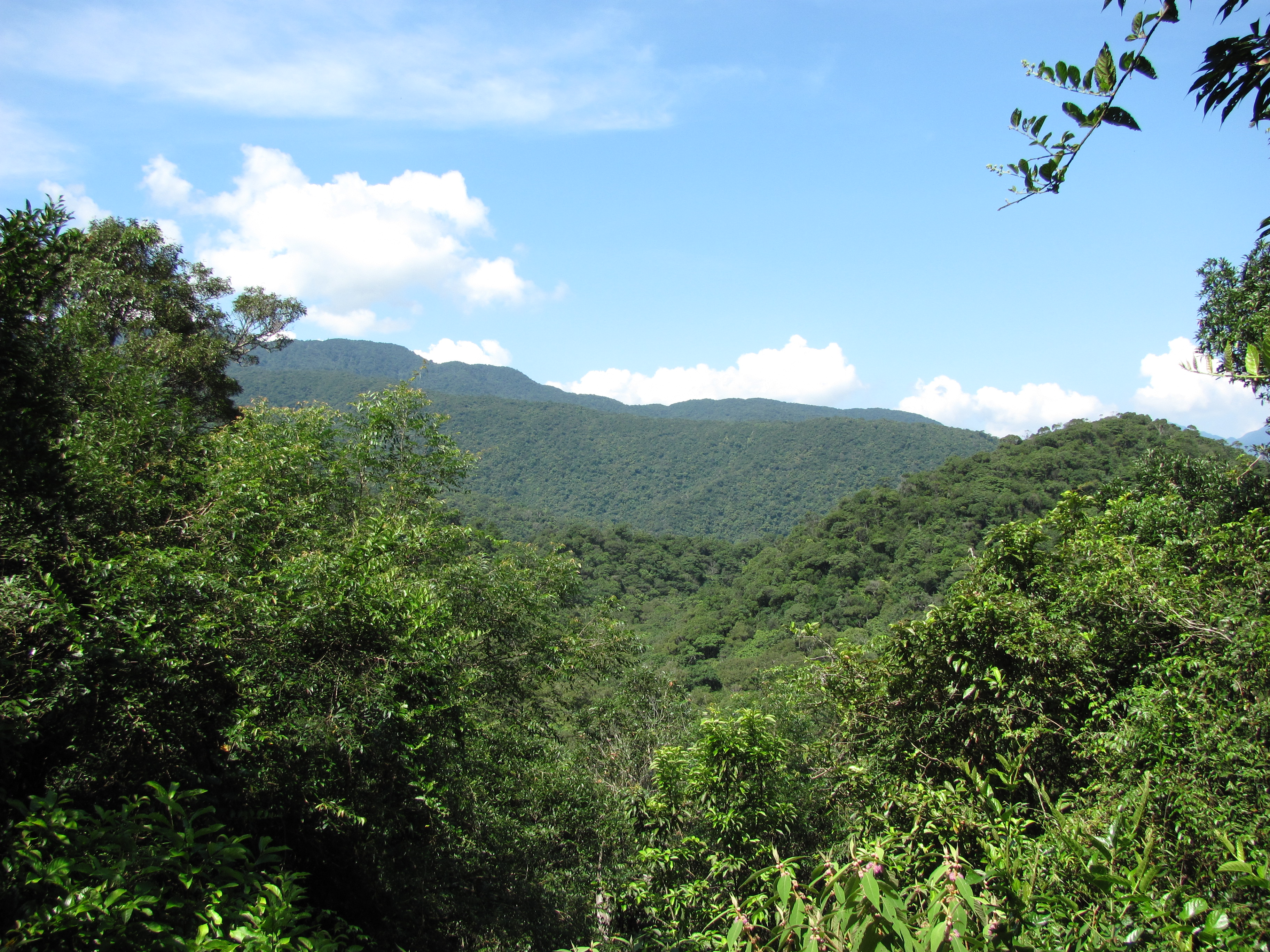 Fushan subtropical rainforest